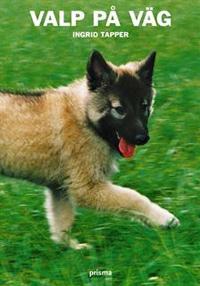 valp-pa-vag-den-unga-hundens-utveckling-och-beteende